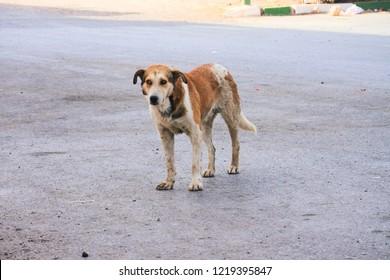 Homless dog on the street