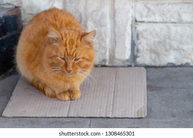 Homless redhead injured cat sitting on a cardboard piece. Poor man, inequality and job loss concept.