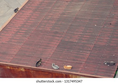 Homless street different colored cats on the roof