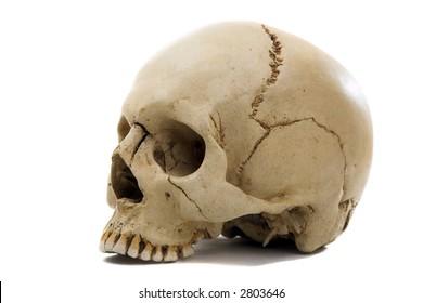 Homo sapience cranium isolated on white background