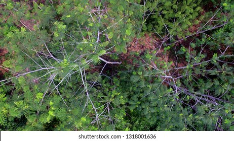 homogen plantation from above