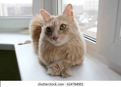 Homunculus loxodontus cat