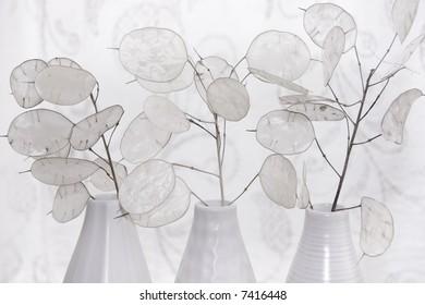 honesty in vases