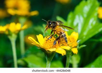 Honey Bee, Bee.