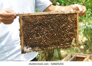 honey bee business demo