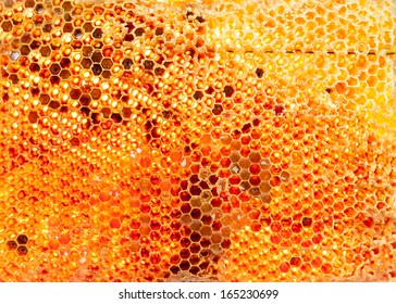 honey bee hive isolated on background in gold