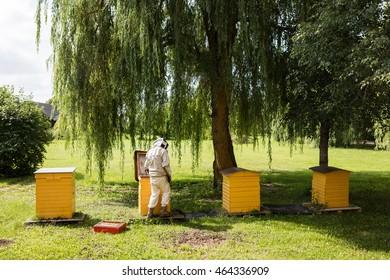 Honey bee hives.