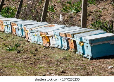 Honey bee hives placed in the forest.