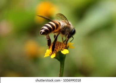 Honey Bee on Park