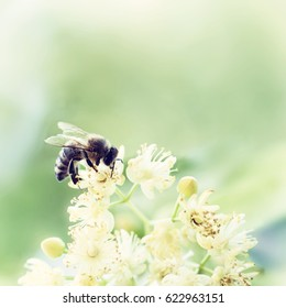 Honey bee pollinate flower in the spring meadow. Seasonal natural scene. Beauty photo filter.
