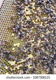 Honey bees in a bee hive making honey.