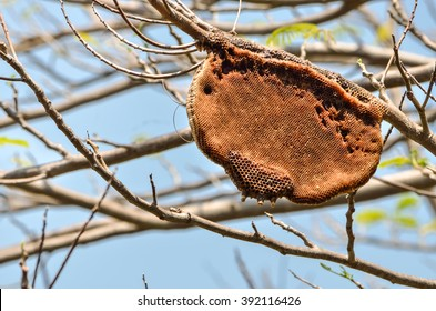 Honey bees and hive on tree branch, with place for your text