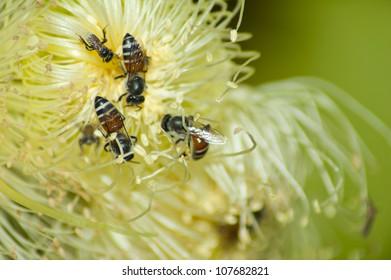 Honey bees on the center of flower