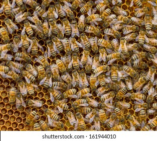 Honey bees on a honeycomb. Square composition. High level of detail.