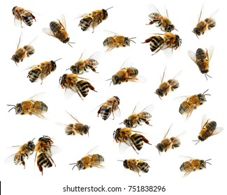Honey bees on white background
