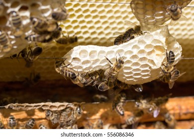 Honey bees on wooden frames in beehive.
