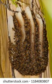 Honey bees swarm around a hive