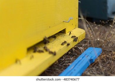 Honey Bees Swarming and Flying Around Their Beehive. Selective Focus. Bees Coming In and Out of Their Yellow Beehive. Wooden Bee Hive Close Up.