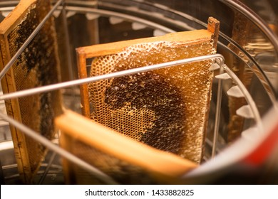 Honey Harvest - collecting honey from honeycombs. natural honey dripping.