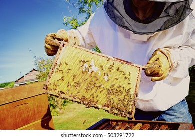 honey production and beekeeping