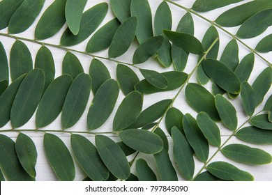 Honey Thorn Locust Tree Branches with Green Leaves on White Wood Background. Summer Spring Easter Purity Wellness Body Skin Care Organic Cosmetics Concept. Product Branding