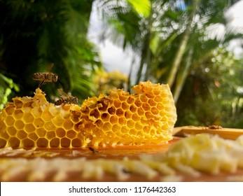 honeybee & honeycomb natural background