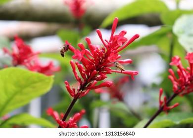 honeybee suction flower extract, tropical flowers, flower garden.