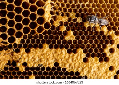 Honeycomb with bee texture background