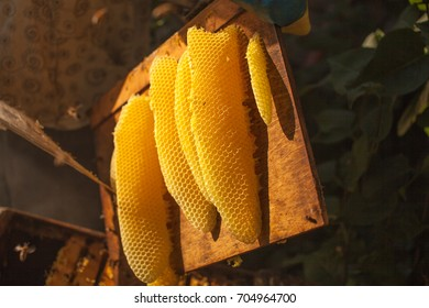 honeycomb, beehive frame, raw honeycomb frame with honey