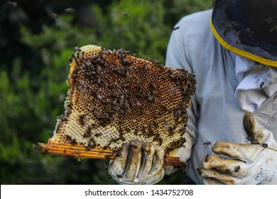 Honeycomb with bees and honey. Man holding huge honeycomb in his hand with a lot of bees on it. Beekeper at his work. Getting honey from the bee house. Nature, insects. Sweet. Apiculture. Beeswax.