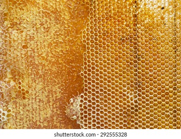 honeycomb filled with honey texture
