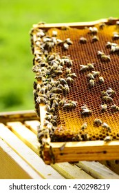 Honeycomb frame with bees