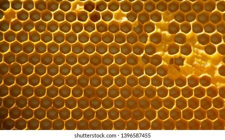 Honeycomb with honey. macro shot texture close up