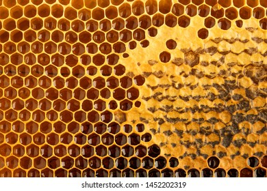 Honeycomb with honey and pollen. Close-up background with selective focus.
