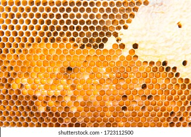 honeycomb with honey as very nice natural background