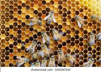 beehive images stock photos vectors shutterstock