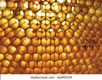 honeycomb macro,