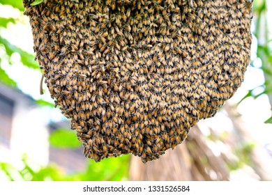 Honeycomb in the nature