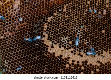 honeycomb and  nature background