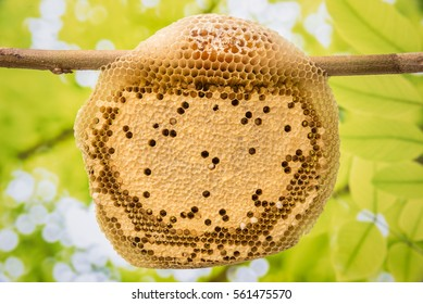 honeycomb on blur green leaves background