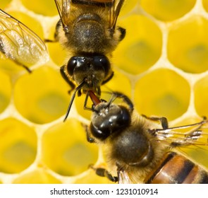 Honeycomb size corresponds to the size of the larvae of future bees.