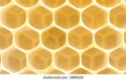 Honeycomb. Yellow clear hexagon background. Extremely close-up