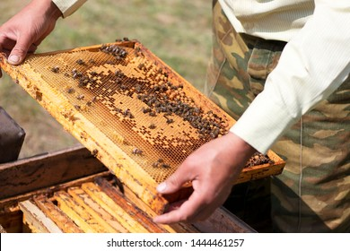 Honeycombs with fresh yellow honey and bees in the apiary. The beekeeper keeps honeycombs with bees that work, collecting honey. Frame with honey closeup.