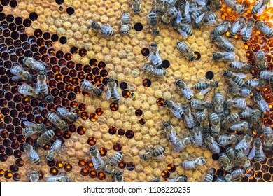 honeycomp with bees