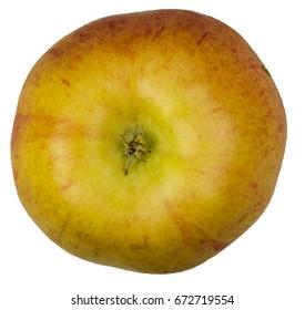 Honeycrisp Apple on white background - bottom.