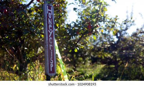 Honeycrisp apple sign orchard fall autumn picking golden delicious fuji gala granny smith thanksgiving halloween october september