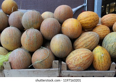 Honeydew melons in boxes