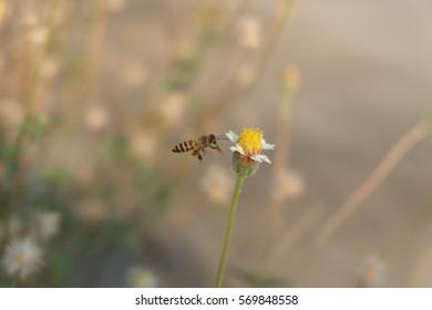 honeydew/bee nectar/bee