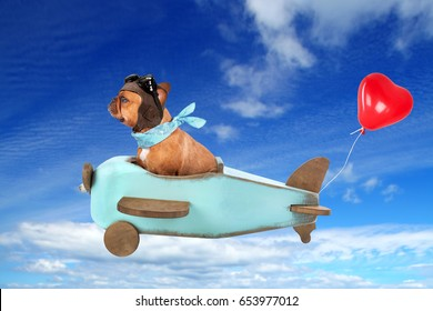 honeymoon - cute french bulldog flying on wooden airplane with red heart balloon in the sky