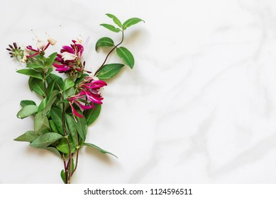 honeysuckle flowers bouquet over white marble table with copy space. top view. mock up. nature concept